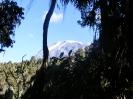 Az esőerdőből a csúcs